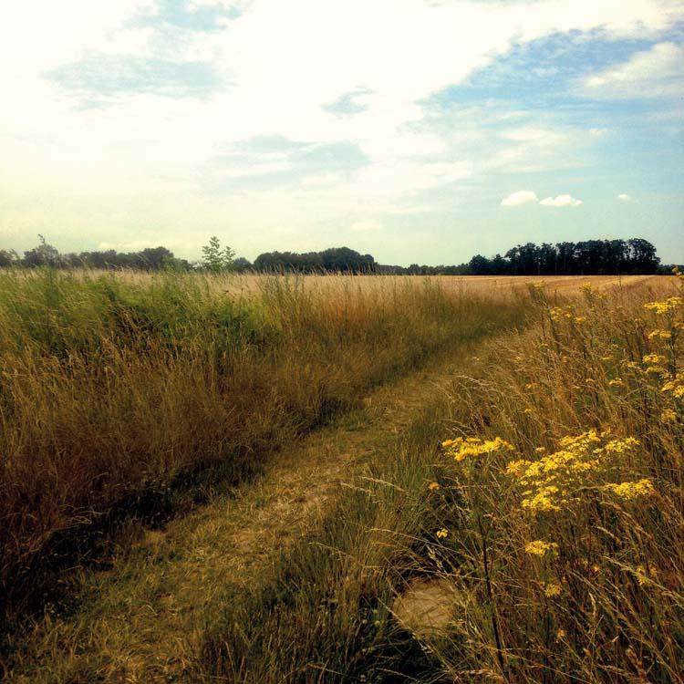 の いる 麦畑 カラス