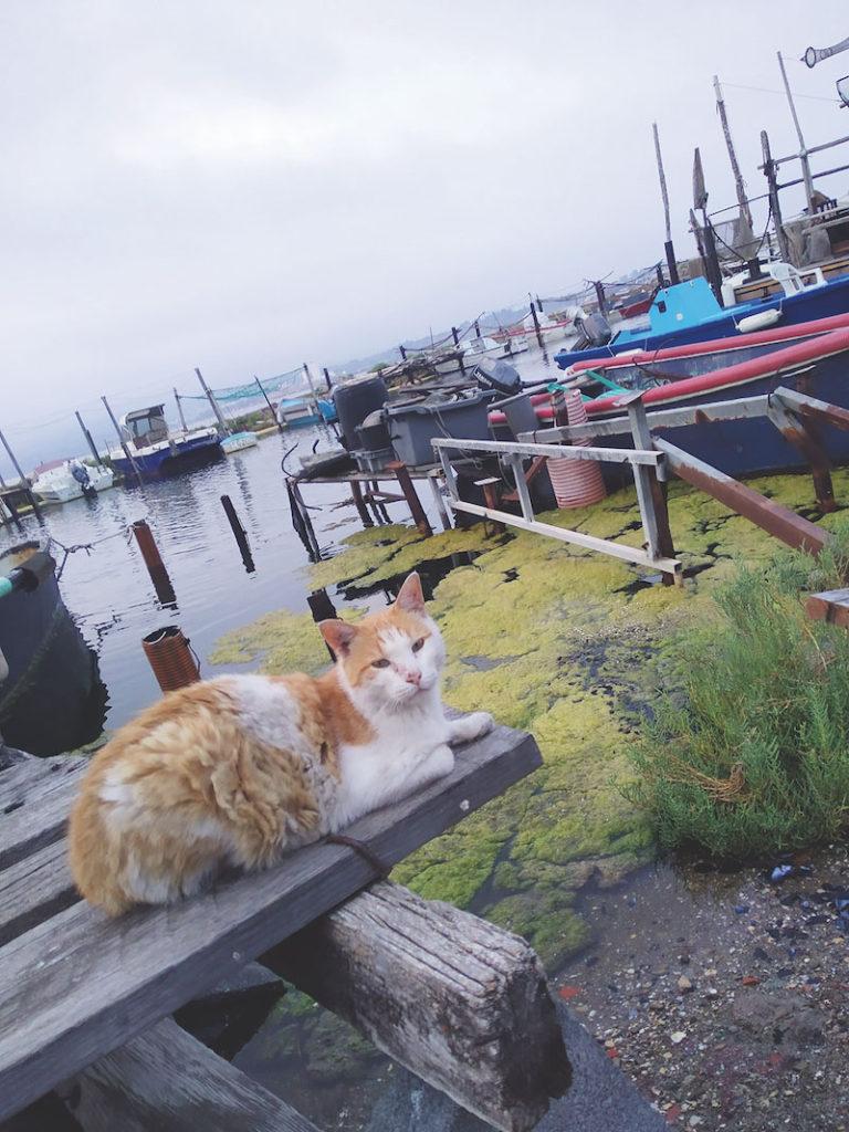 猫がたくさんのラ・ポワント・クールト。猫好きなブラッサンスやヴァルダが通ったのも頷ける。